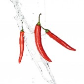 spicy red chili peppers with clear water splash and drops isolated on white