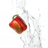 egész ízletes friss piros harangbors vízzel fröccsenés és cseppek elszigetelt fehér