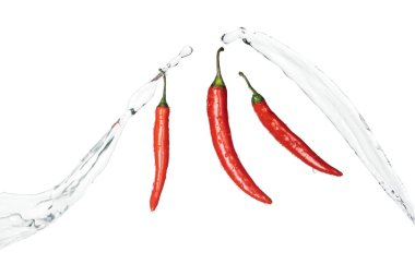 bright spicy red chili peppers with clear water splashes isolated on white