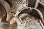 Zavřít pohled na bílé syrové houby s texturou