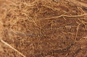 close up view of textured natural brown coconut peel