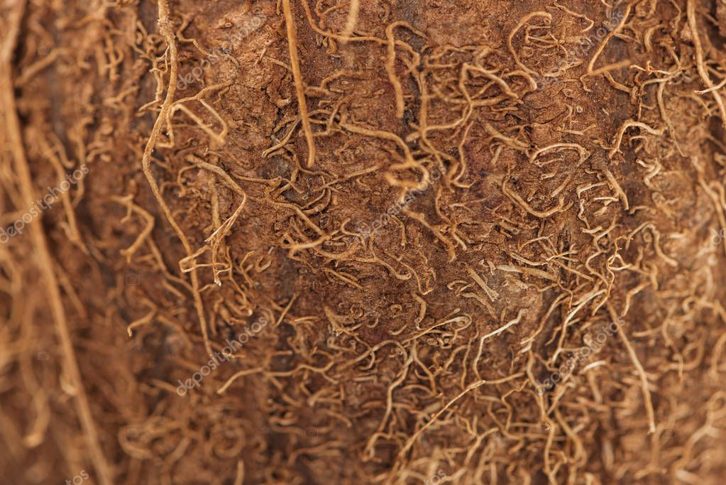 close up view of textured brown coconut peel