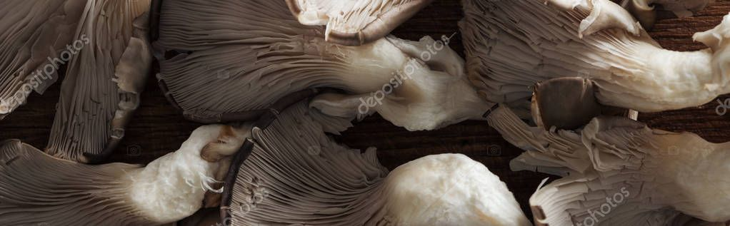 close up view of textured white and brown mushrooms in pile, panoramic shot