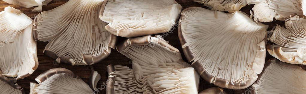 close up view of textured mushrooms in pile, panoramic shot