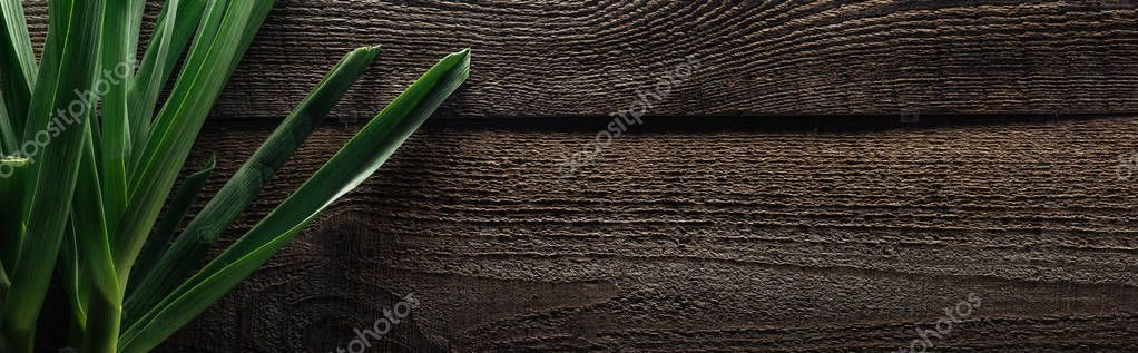 top view of green leek on wooden rustic table, panoramic shot