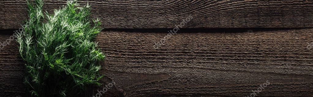top view of green dill on wooden weathered table with copy space, panoramic shot