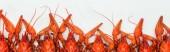 panoramatický záběr červených humrů hlav na bílém pozadí