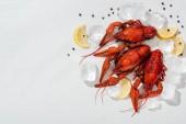 Draufsicht auf rote Hummer, Paprika, Zitronenscheiben mit Eiswürfeln auf weißem Hintergrund