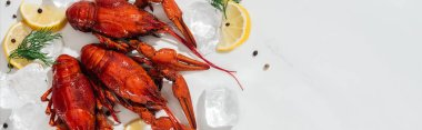 panoramic shot of red lobsters, peppers, lemon slices and green herbs with ice cubes on white background