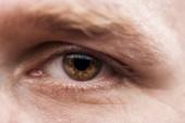 close up view of mature man brown eye with eyelashes and eyebrow looking at camera