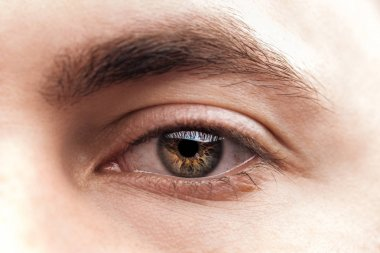 Close up view of young woman brown eye with eyelashes and eyebrow stock vector