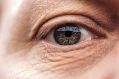 close up view of senior man eye with eyelashes and eyebrow looking at camera