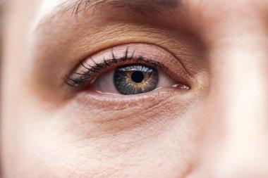 Close up view of adult man eye with eyelashes and eyebrow looking at camera stock vector
