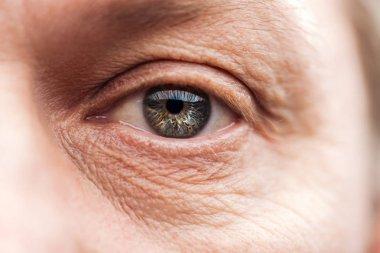 Close up view of mature man eye with eyelashes and eyebrow looking at camera stock vector