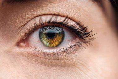 Close up view of young woman eye with eyelashes and eyebrow looking at camera stock vector