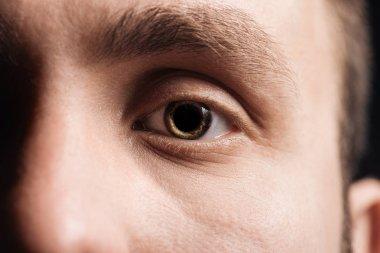 Close up view of human eye with eyelashes and eyebrow looking at camera stock vector