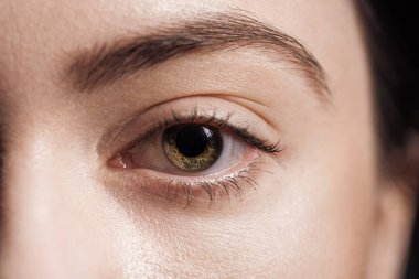 Close up view of young woman green eye looking at camera stock vector