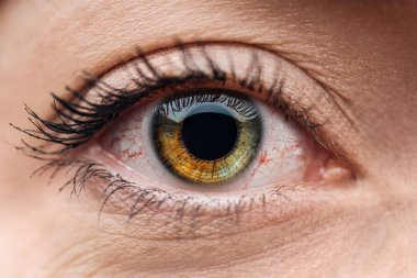 close up view of human brown and green colorful eye with eyelashes