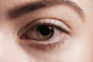 Close up view of human brown eye looking at camera stock vector