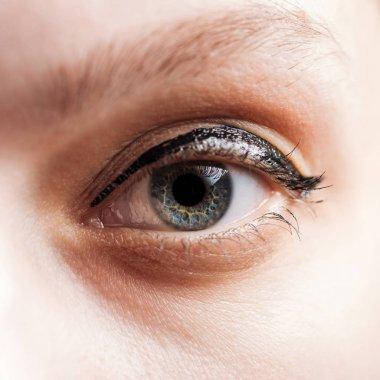 Close up view of woman blue eye looking at camera stock vector