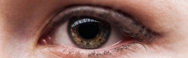 Close up view of woman brown eye looking at camera, panoramic shot stock vector