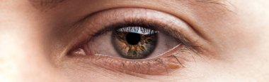 Close up view of human eye, panoramic shot stock vector