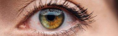 Close up view of human green and brown eye looking at camera, panoramic shot stock vector
