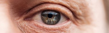 Close up view of human eye with wrinkles around looking at camera, panoramic shot stock vector