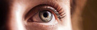 Close up view of human grey eye looking away, panoramic shot stock vector