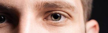 Close up view of human grey eyes looking at camera, panoramic shot stock vector
