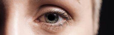 Close up view of human grey eye looking at camera, panoramic shot stock vector