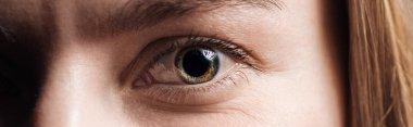 Close up view of human eye looking at camera, panoramic shot stock vector