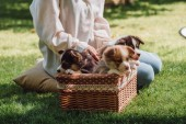 cropped view of girl sitting in green garden with welsh corgi adorable puppies in wicker box