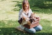 krásná blondýnka, která sedí v zelené zahradě s velšýma korgi rozkošné štěňata v krabici