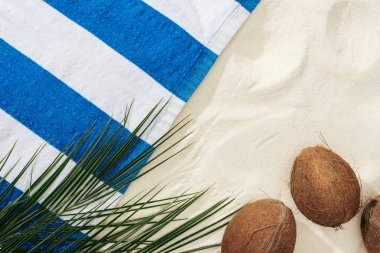 green palm leaves, coconuts and striped towel on sand