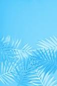 Fényképek felső kilátás-ból papír zöld-ra kék minimalista háttér-val másol hely