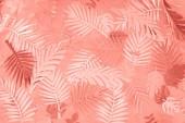pohled na korálový tropický papír Vystřihněte palmové listy, minimalistické pozadí