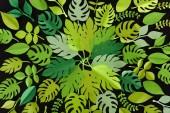 pohled shora na papír řezané zelené listy izolované podle černého, vzorek pozadí