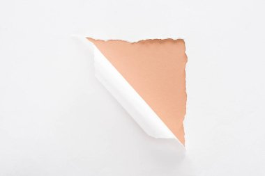 white torn and rolled paper on beige background