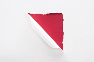 White torn and rolled paper on deep red background stock vector