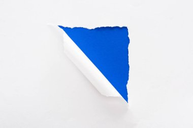 white torn and rolled paper on electric blue colorful background