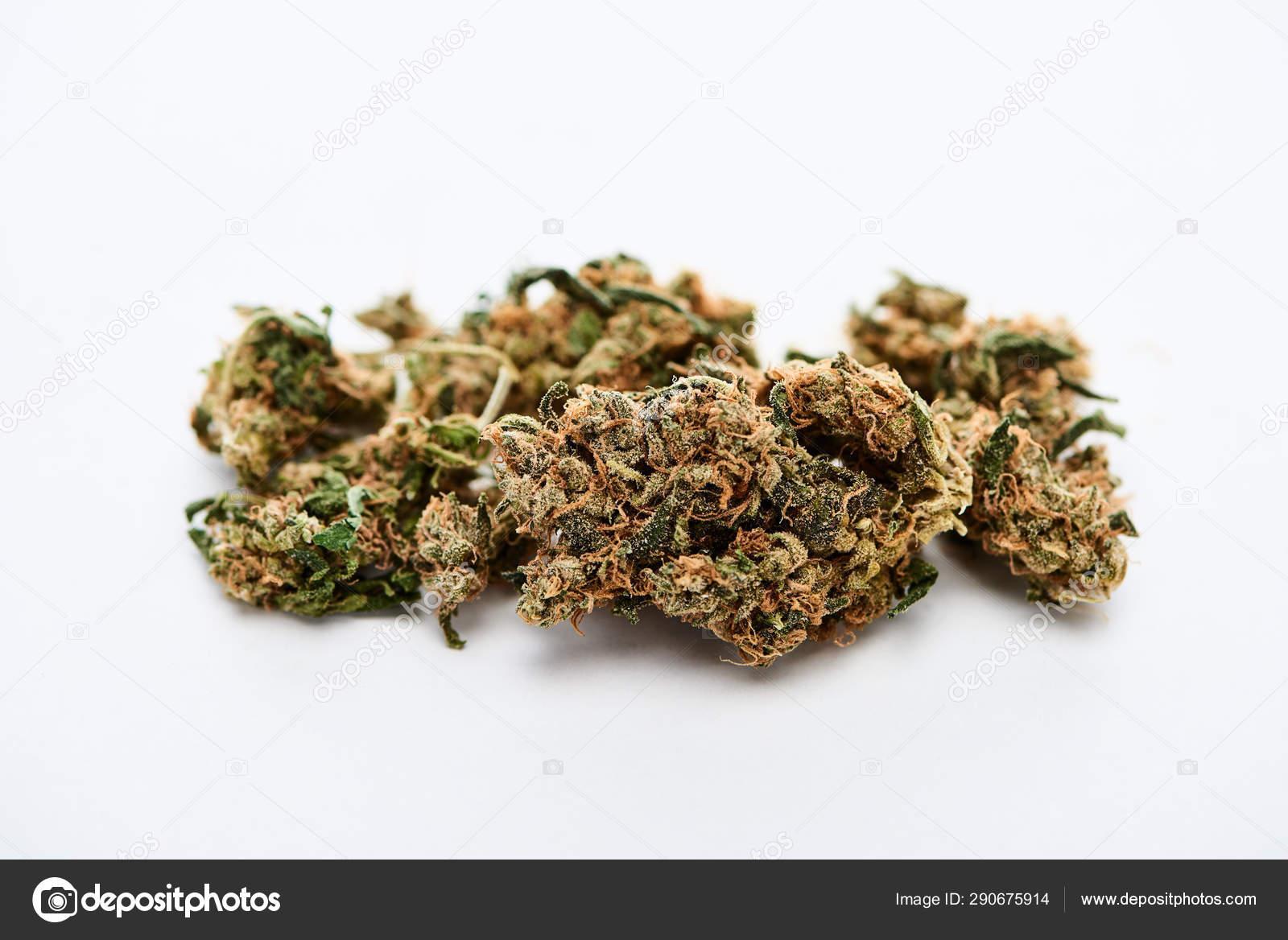 В камней конопля почках от в горшках марихуана