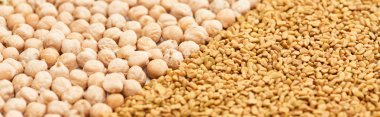 panoramic shot of chickpea near whole grains