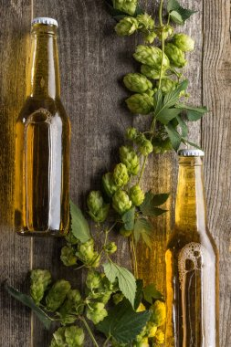 Top view of beer in bottles with green hop on wooden background stock vector