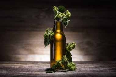 Beer in bottle with fresh hop on wooden table in darkness with back light stock vector