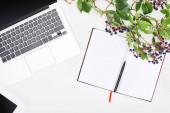 horní pohled na prázdný notebook s perem v blízkosti notebooku a větev z divokých hroznů se zelenými listy a bobulemi izolovanými na bílém