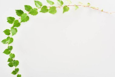 Top view of hop plant twig with green leaves isolated on white with copy space stock vector