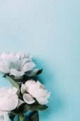 Fotografie top view of white peonies on blue background
