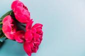 Fényképek felső nézet színes rózsaszín bazsarózsa kék háttér