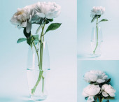 bouquet of white peonies in glass vase on blue background, collage